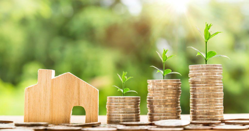 事業投資のお金から出た芽